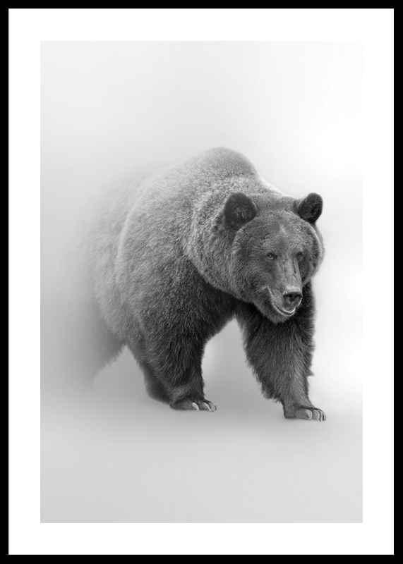 Faded Bear-0