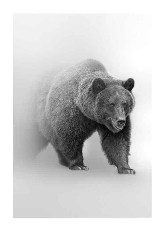 Faded Bear-1