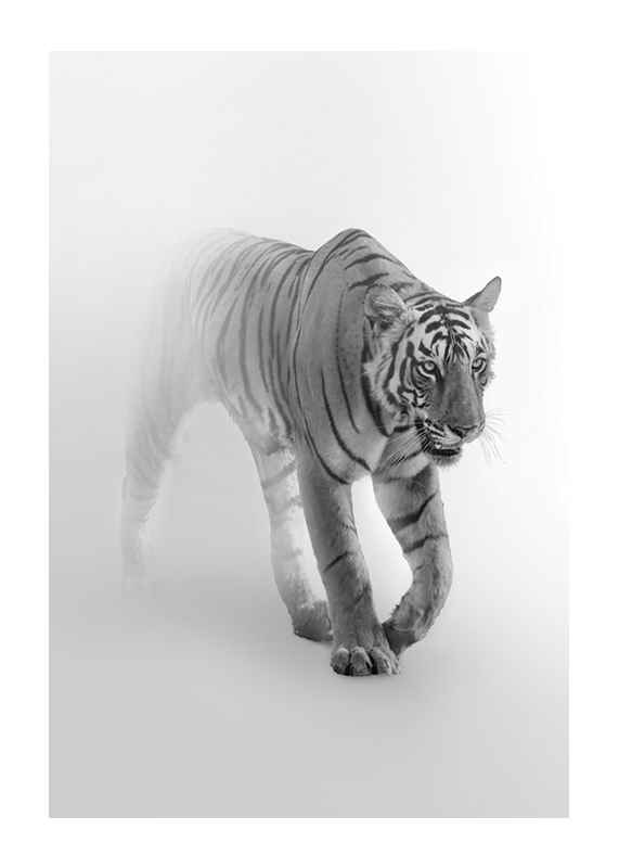 Faded Tiger-1