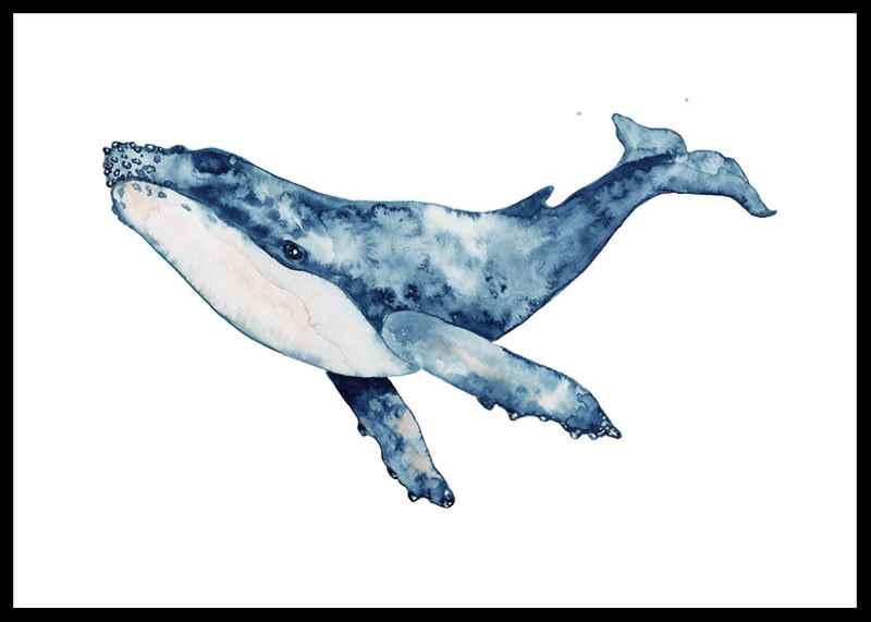 Big Whale-0