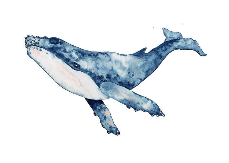Big Whale-1