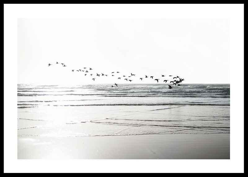 Birds Over Beach-0