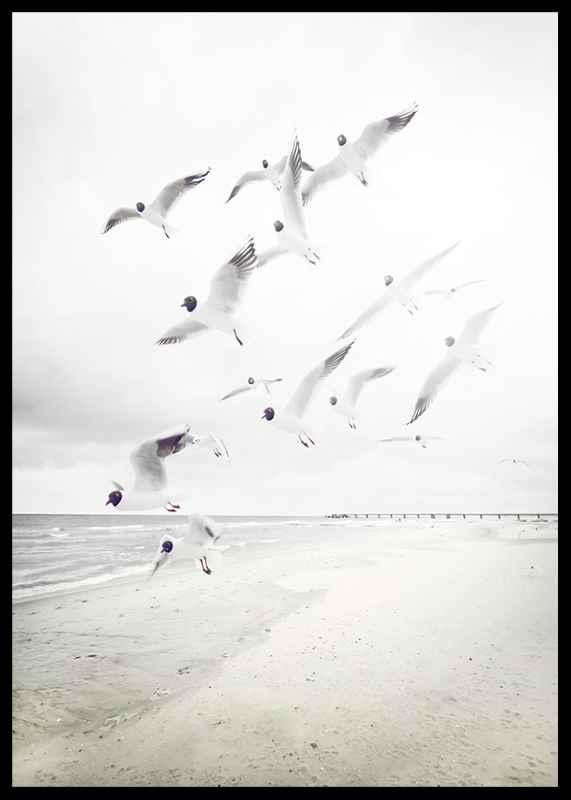 Black-Headed Seagulls-2