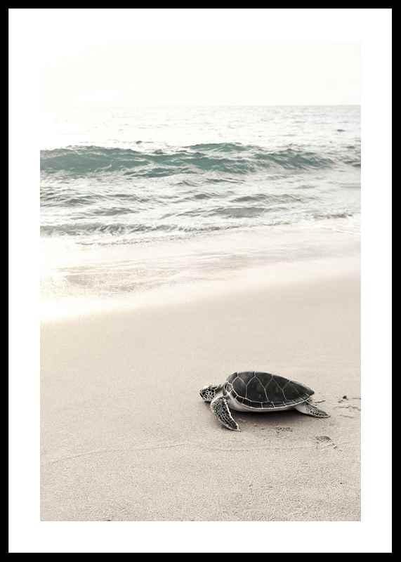 Sea Turtle On Beach-0