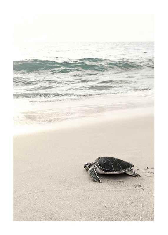 Sea Turtle On Beach-1