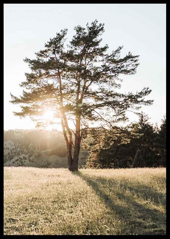 Tree in Sunlight-2