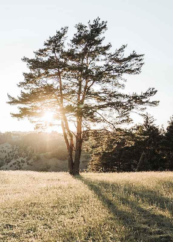Tree in Sunlight-3