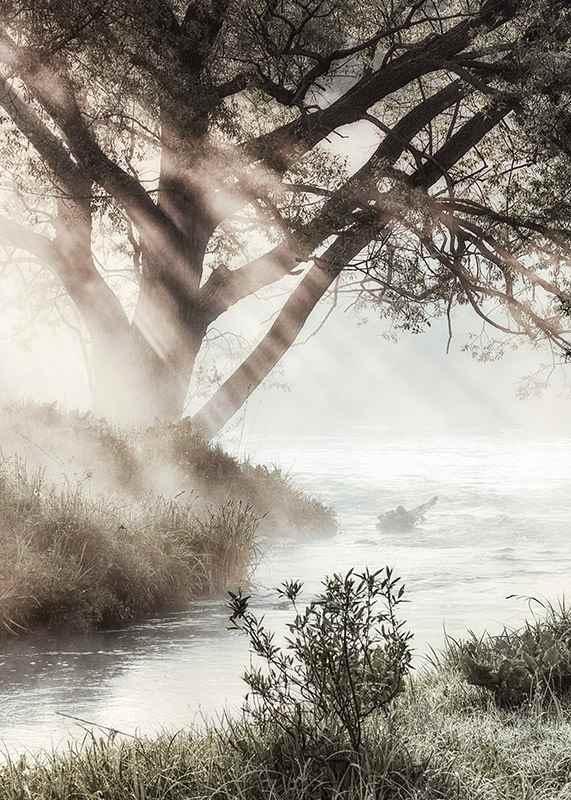 Foggy Dawn-3