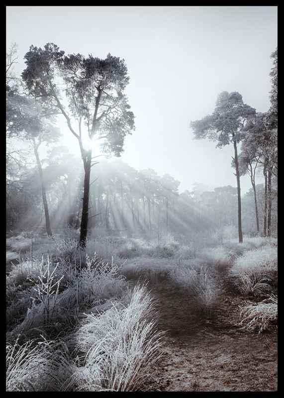 Winter Sunrays-2
