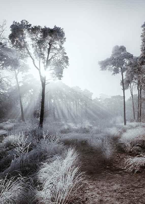 Winter Sunrays-3