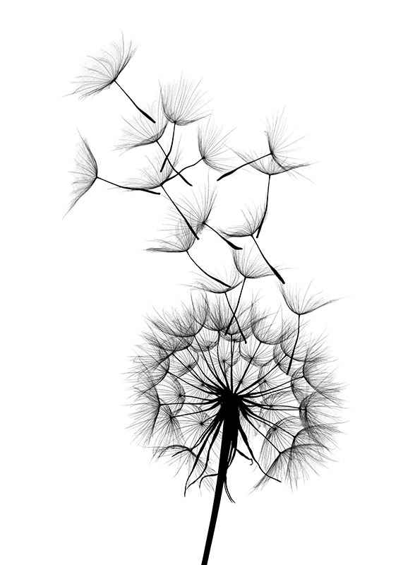 Dandelion Wish-3