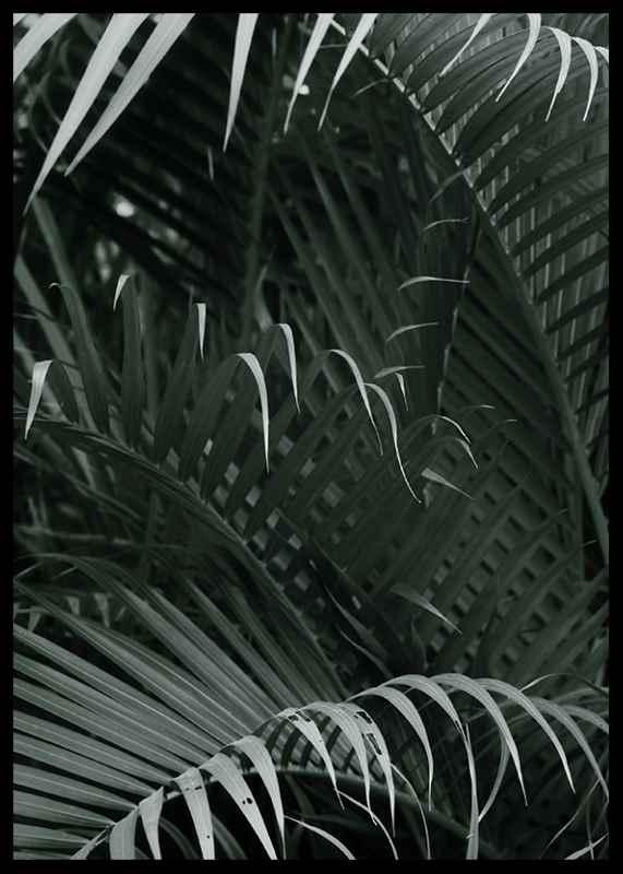 Palm Leaf No1-2