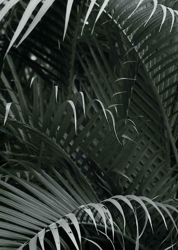 Palm Leaf No1-3