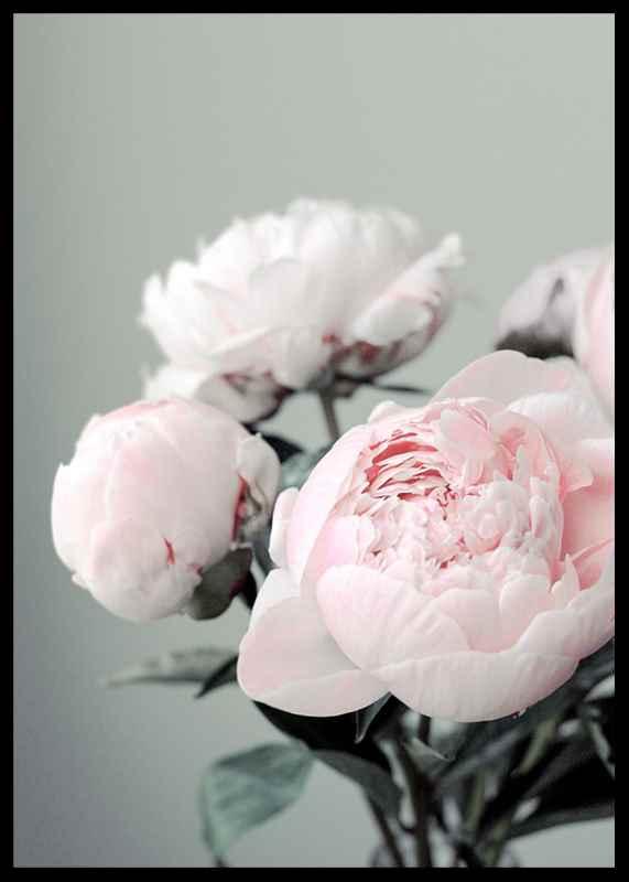 Pink peonies No1-2