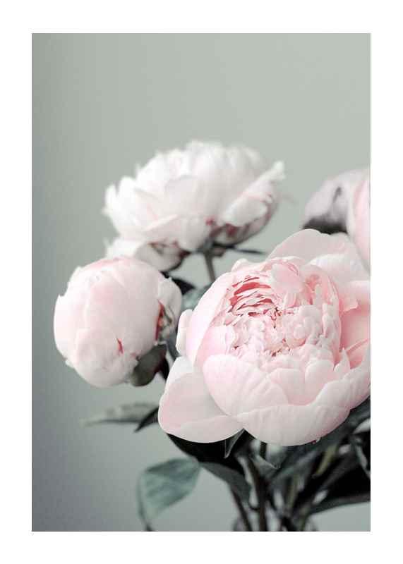 Pink peonies No1-1