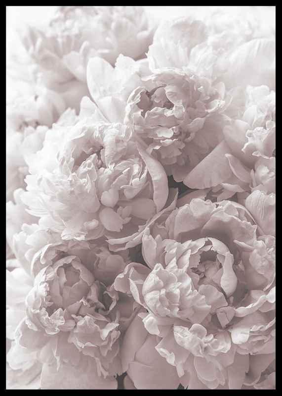 Bright Pink Roses No2-2