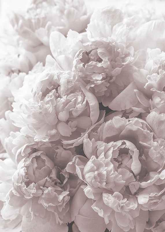 Bright Pink Roses No2-3