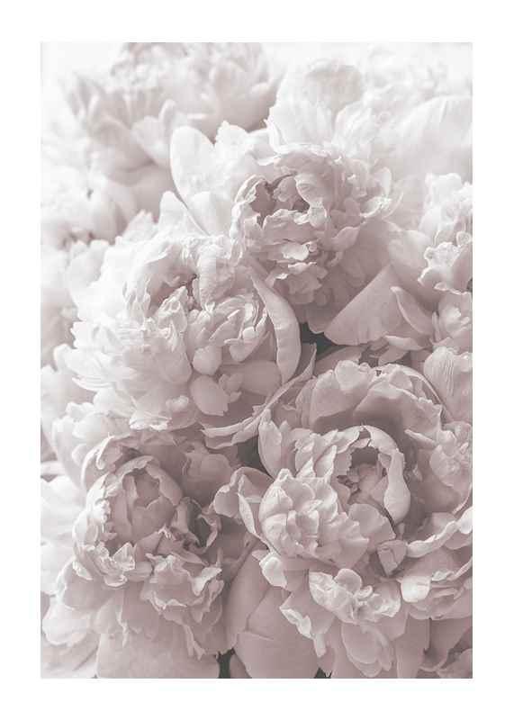 Bright Pink Roses No2-1
