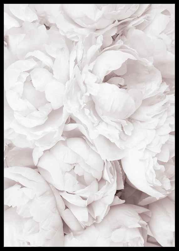 Bright Pink Roses No3-2