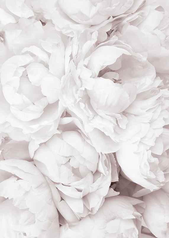 Bright Pink Roses No3-3