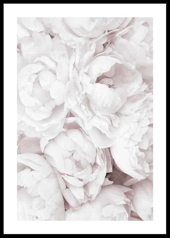 Bright Pink Roses No3-0