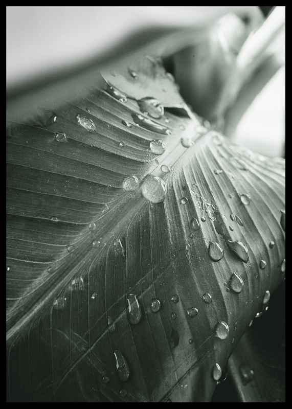 Palm Leaf Raindrops-2
