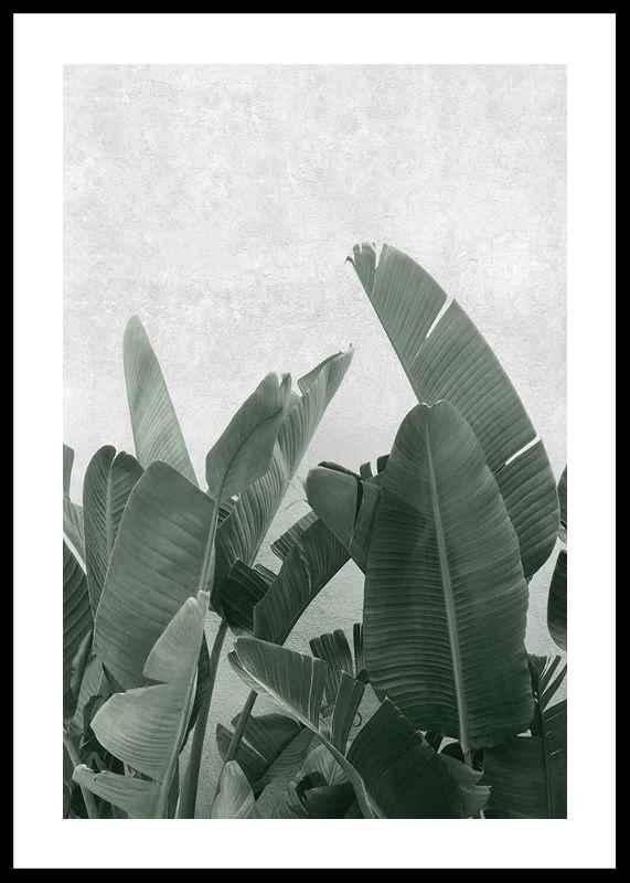 Banana leaves No3-0