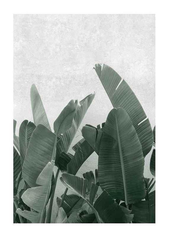 Banana leaves No3-1