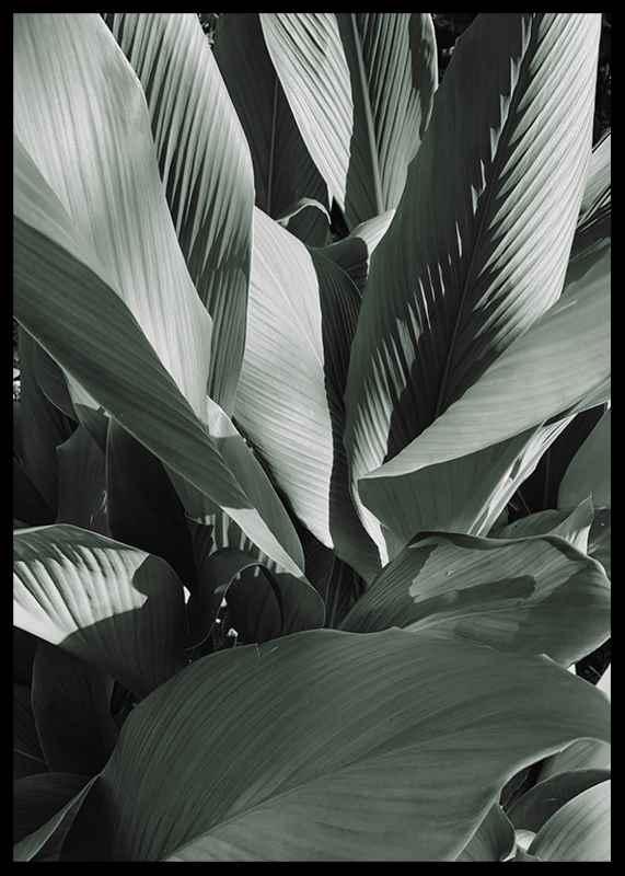 Banana Leaves No4-2