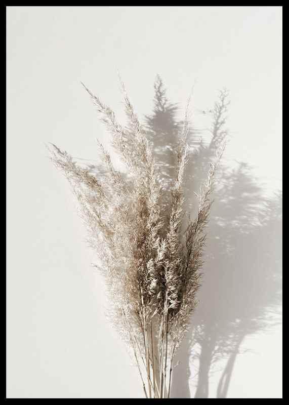 Dry Reeds No1-2