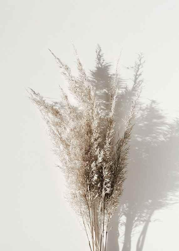 Dry Reeds No1-3