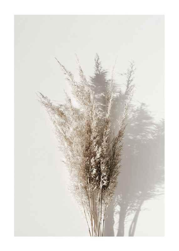 Dry Reeds No1-1