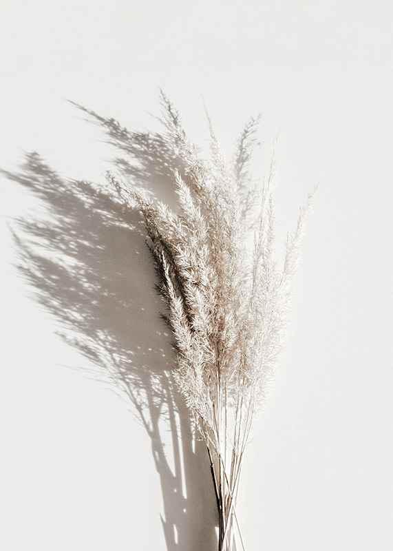 Dry Reeds No3-3