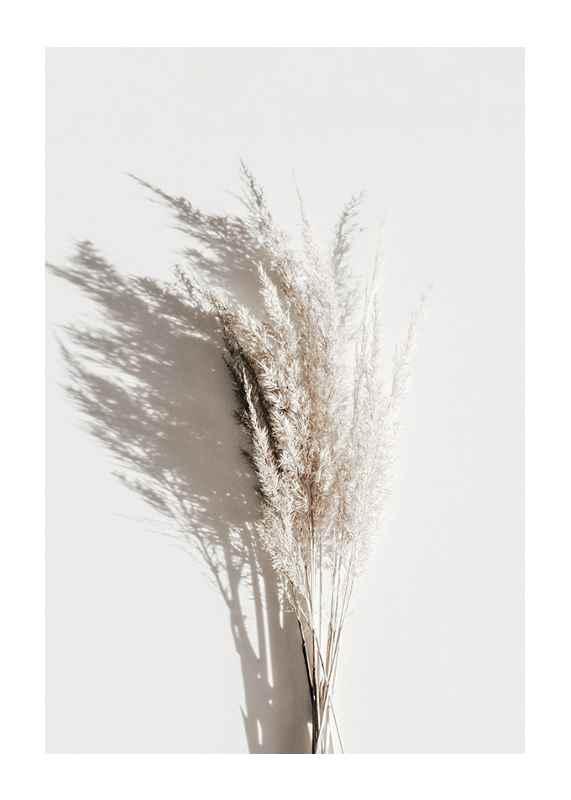 Dry Reeds No3-1