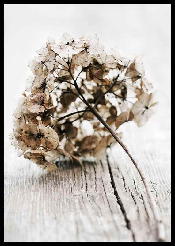 Dried Field Flower No1-2