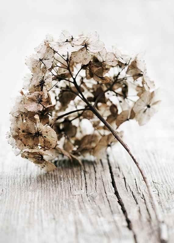 Dried Field Flower No1-3