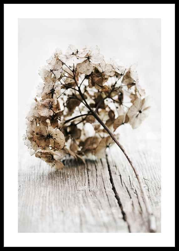 Dried Field Flower No1