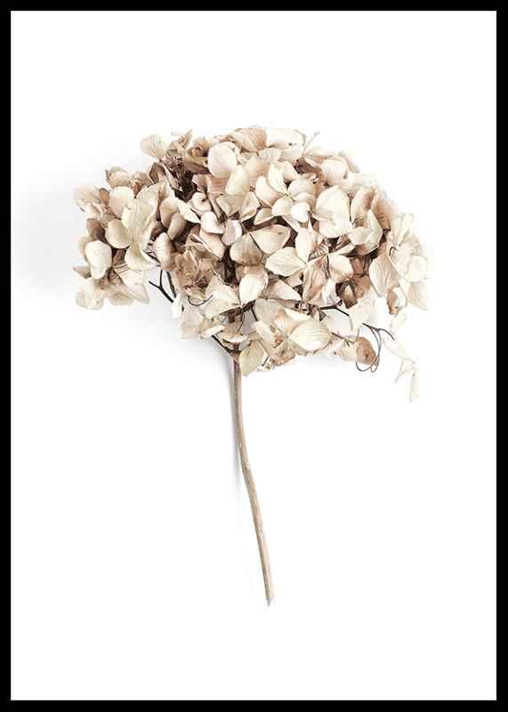 Dried Field Flower No2-2