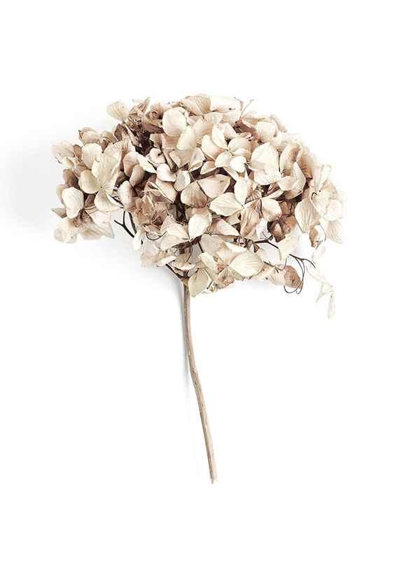 Dried Field Flower No2-3