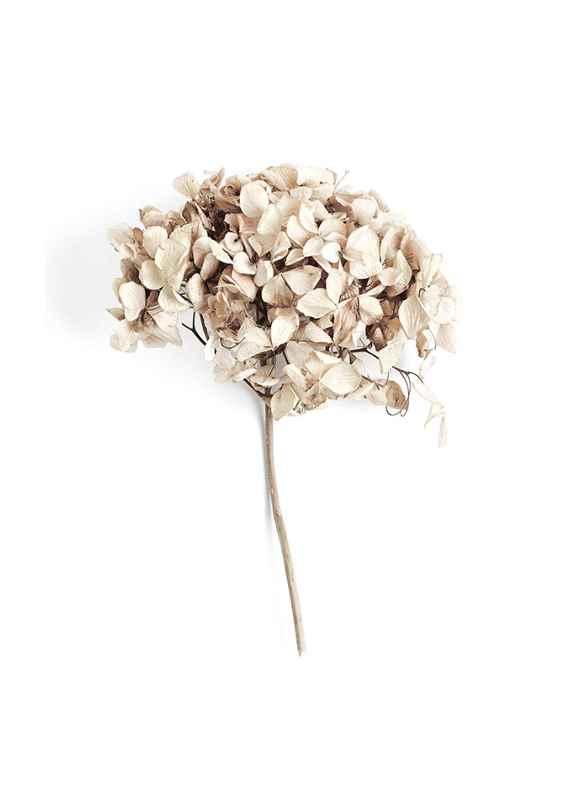 Dried Field Flower No2-1