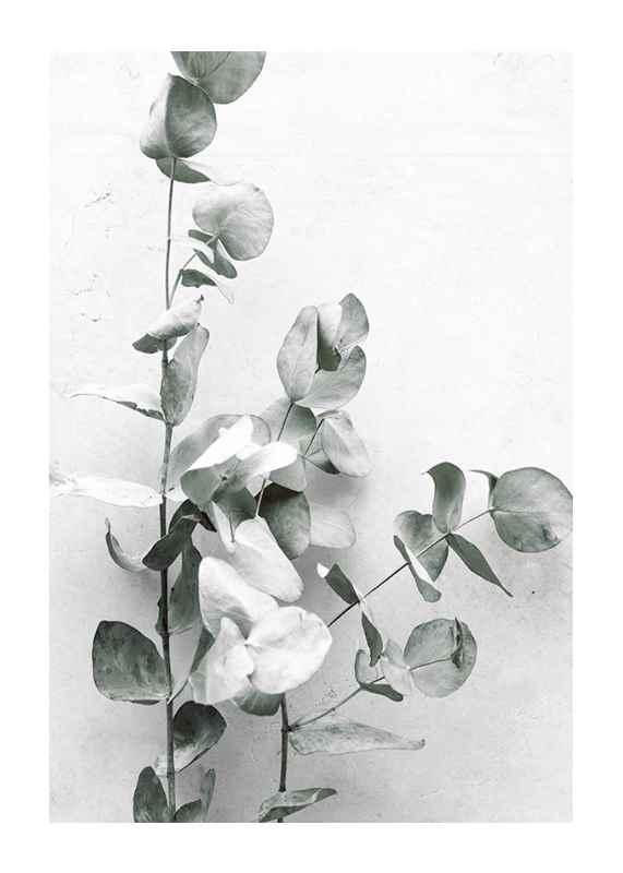 Eucalyptus No4-1