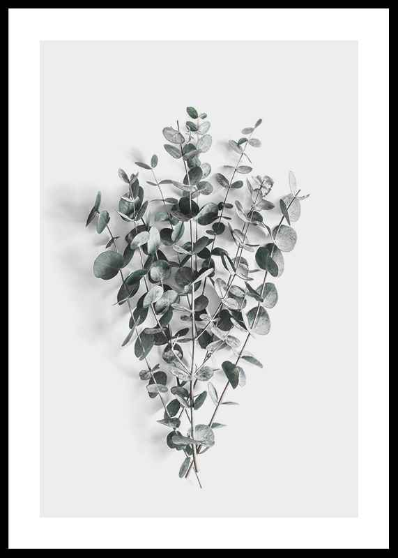 Eucalyptus No5