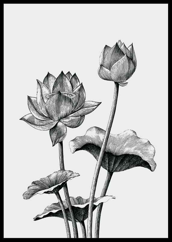 Sketched Flowers-2