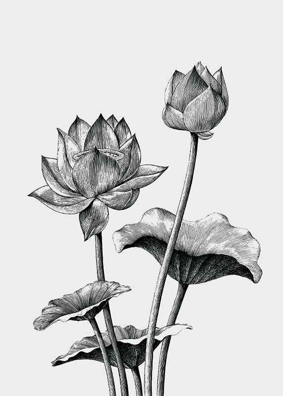 Sketched Flowers-3