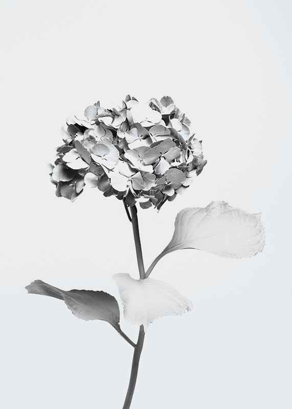 White Painted Flower-3