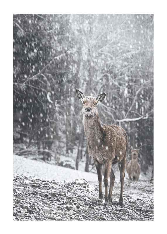 Deer In Snow-1