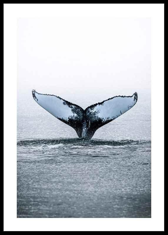 Humpback Whale-0