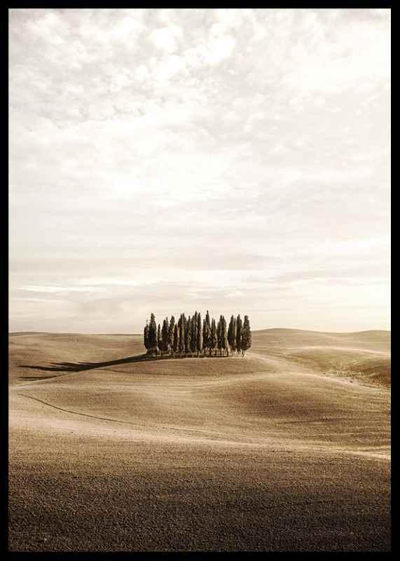 Cypress trees-2