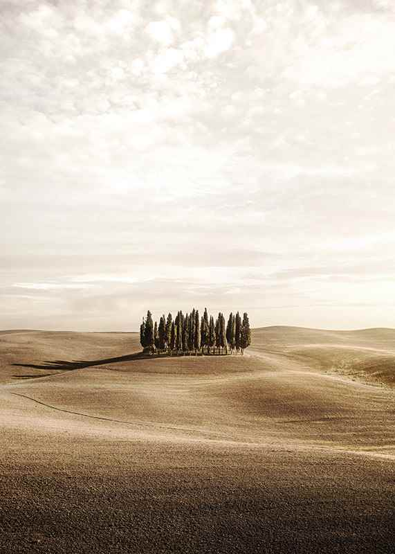 Cypress trees-3