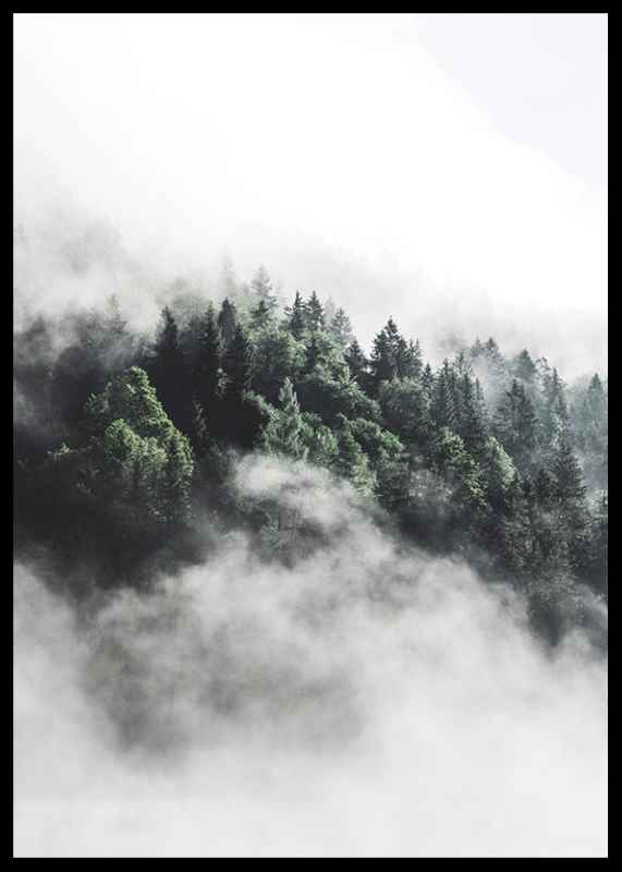 Forest In Mist-2